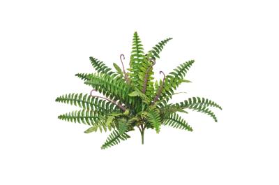 Foliage and Stems