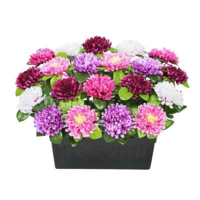 30CM CHRYSANTHEMUM X 20 TROUGH
