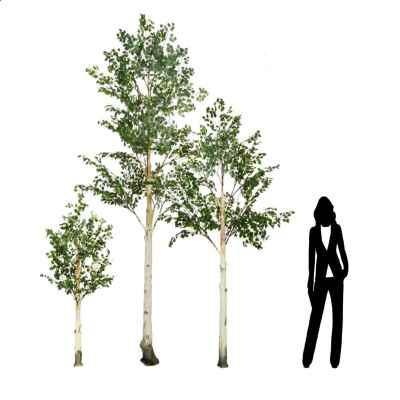 200, 300 & 400CM BIRCH TREE PACK
