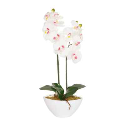 50CM PINK ORCHID X 2 IN OVAL POT