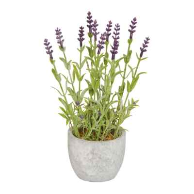 24CM MINI LAVENDER IN POT