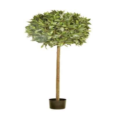 160X60CM BAY TOPIARY IN POT (1554 LVS)