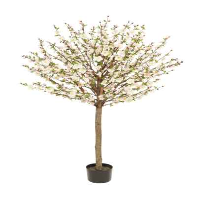 160CM PEACH CHERRY BLOSSOM X 1400 TREE IN POT