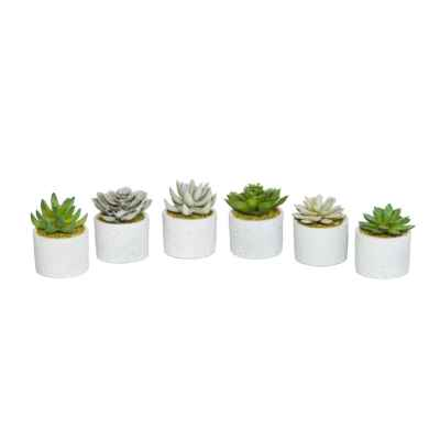 10CM ASSORTED SUCCULENTS IN POTS