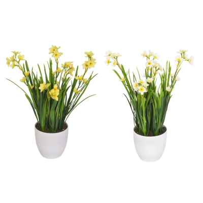 42CM NARCISSUS FOLIAGE X 30 IN POT