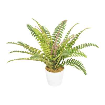 45CM BOSTON FERN IN POT