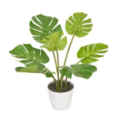 60CM MONSTERA IN POT