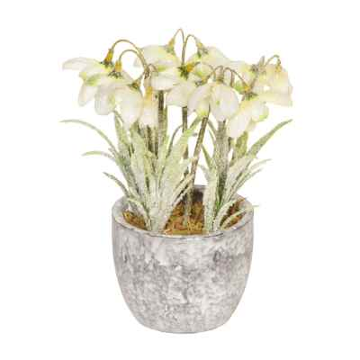 18CM FROSTED SNOWDROP X 6 IN POT