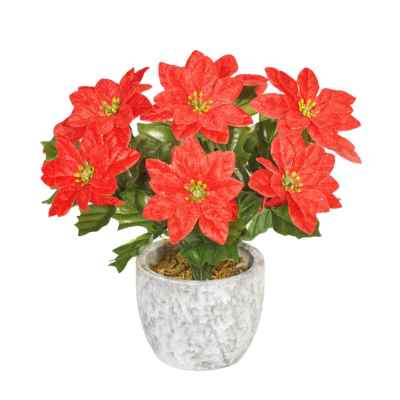 20CM RED POINSETTIA X 9 IN POT