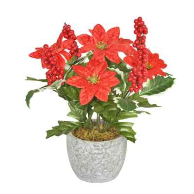 20CM RED POINSETTIA HOLLY BERRY X 9 IN POT