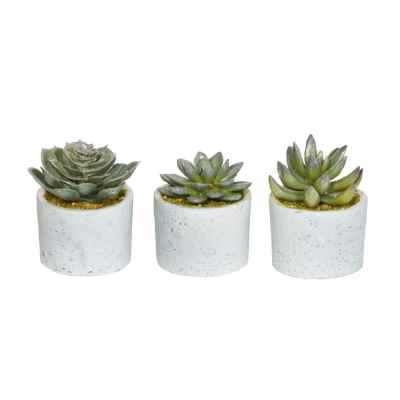 10CM ASSORTED FROSTED SUCCULENTS IN POTS