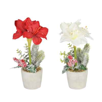 28CM AMARYLLIS CHRISTMAS FOLIAGE IN POT